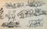Studies of Sheep and a Shepherd